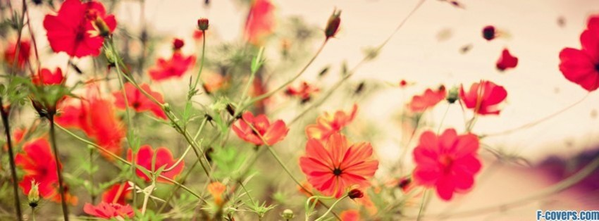 flowers-summer-6-facebook-cover-timeline-banner-for-fb
