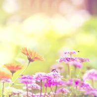 Spring-Bumblebee-twitter-header-9928